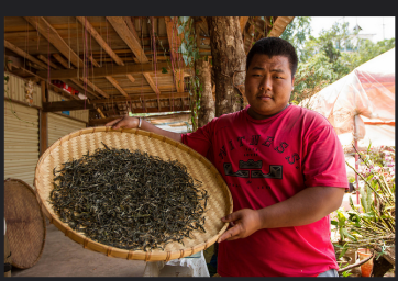 Local tea farmer based in Duoyi Village of China